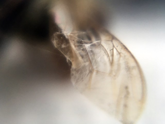 Looking through a Micro Lens is Both Overwhelming and Satisfying