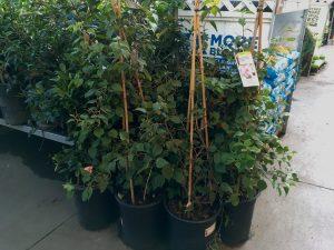 Past peak plants