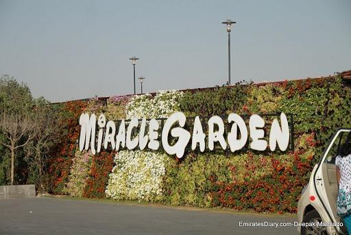 Miraculous 'Miracle Garden' Dubai-Pictures
