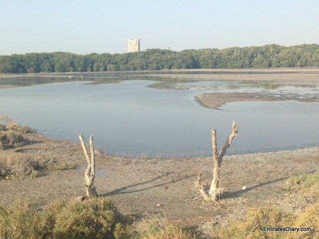 ras-al-khor-wildlife-santuary-pictures-03