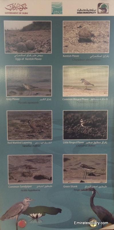 ras-al-khor-wildlife-santuary-pictures-25