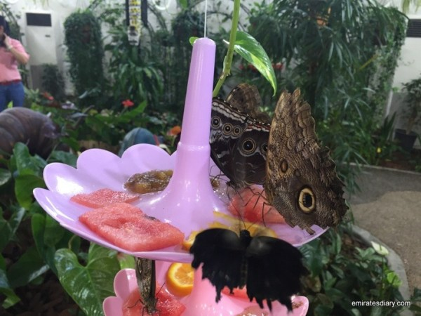21-butterfly-garden-dubai-pictures-2015-emiratesdiary-021