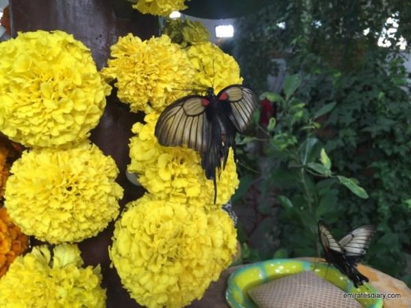 27-butterfly-garden-dubai-pictures-2015-emiratesdiary-027