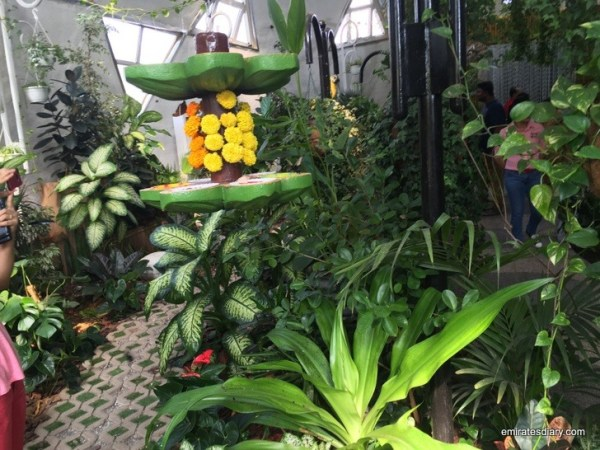 33-butterfly-garden-dubai-pictures-2015-emiratesdiary-033