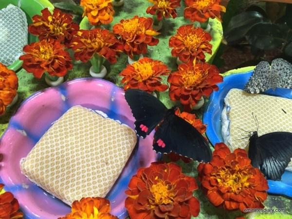 51-butterfly-garden-dubai-pictures-2015-emiratesdiary-051