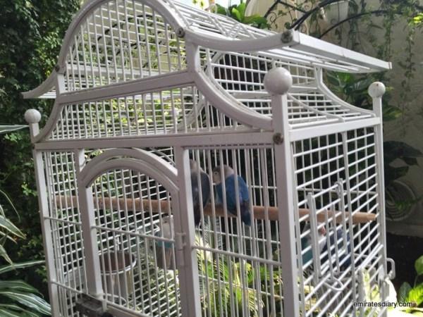 52-butterfly-garden-dubai-pictures-2015-emiratesdiary-052