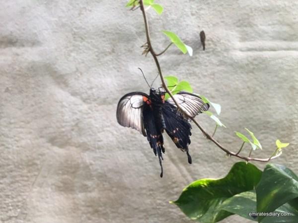 58-butterfly-garden-dubai-pictures-2015-emiratesdiary-058