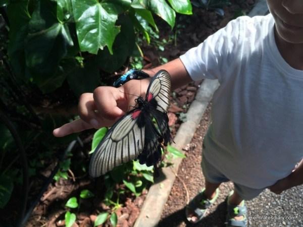 61-butterfly-garden-dubai-pictures-2015-emiratesdiary-061