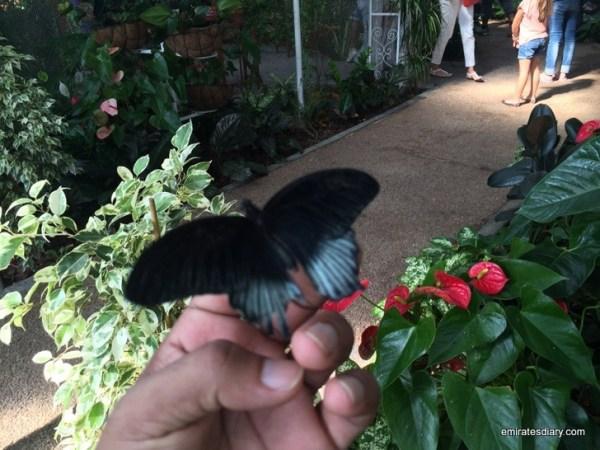 77-butterfly-garden-dubai-pictures-2015-emiratesdiary-077