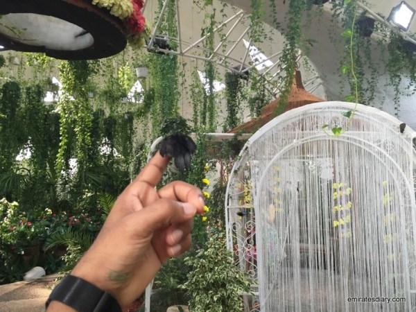 83-butterfly-garden-dubai-pictures-2015-emiratesdiary-083