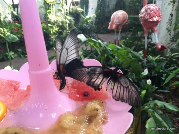 85-butterfly-garden-dubai-pictures-2015-emiratesdiary-085