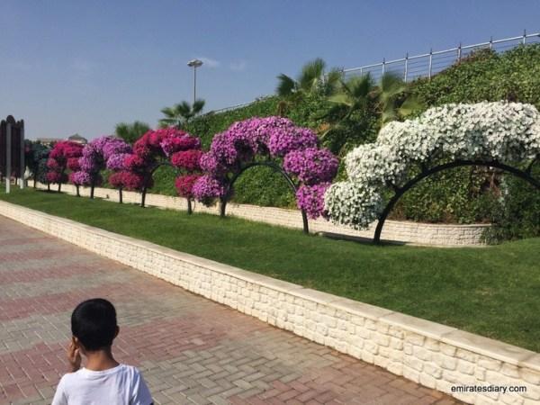 97-butterfly-garden-dubai-pictures-2015-emiratesdiary-097