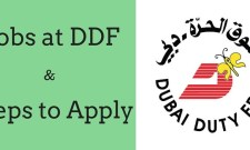 ddf jobs