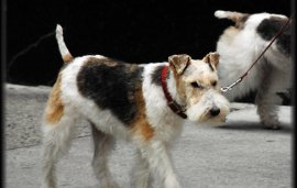 Residents Outraged As Dogs Banned From Dubai Marina