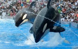 SeaWorld Eyes Up New Park In Saudi Following UAE Backlash