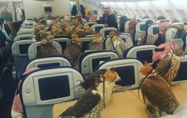 A Saudi Prince Bought 80 Plane Tickets To Transport His Falcons In Style