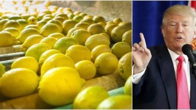 Photo of EEUU extendió la suspensión al ingreso de limones argentinos