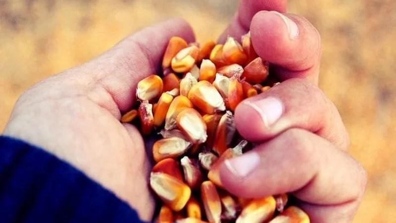 Argentina: Los precios verdes y el pan de los pobres