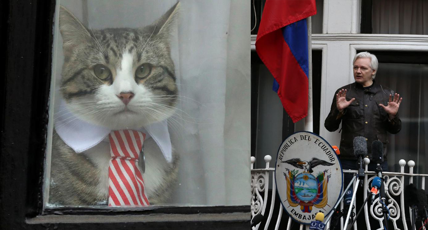 Cat James Julian Assange Embajada Ecuador Londres