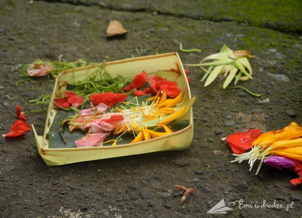 dary_Bali