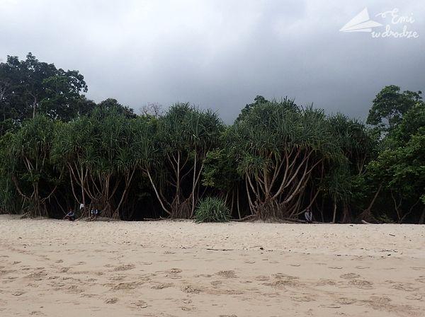 ulewa_tropikalna