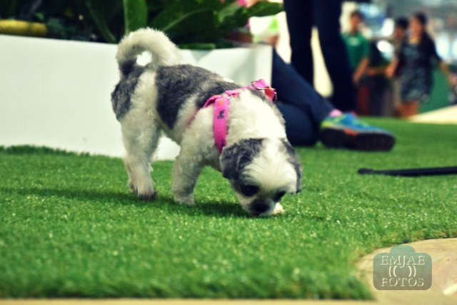 Doggy Rediscover Life Indoor Parkmall