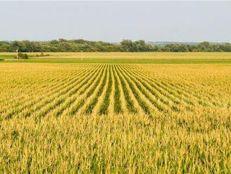 Hazine'ye Ait Tarım Arazileri