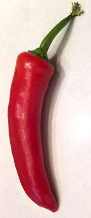 Mango Salsa2