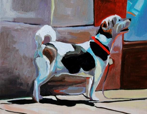 stroud terrier