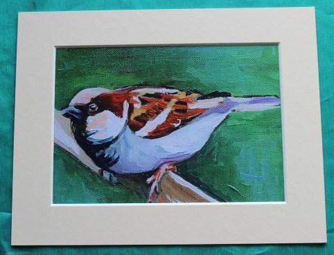 House Sparrow 2