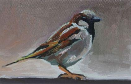 Sparrow #3