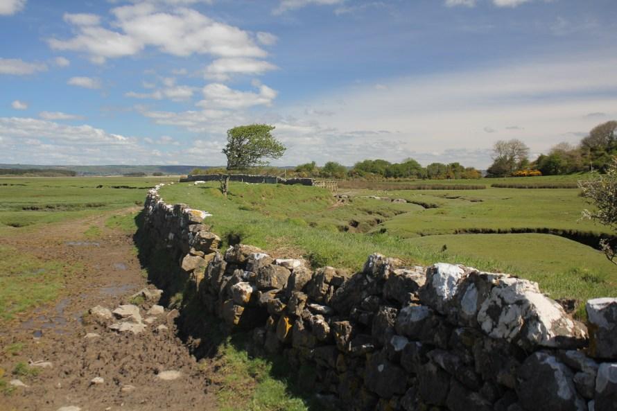 Landimore Marsh, Gower
