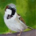Painting of a Sparrow by Emma Cownie