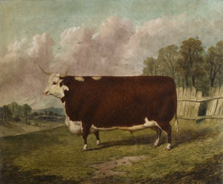 A PRIZE COW IN A LANDSCAPE by Richard Whitford (British d.1890) at Powis Castle, Powys, Wales. The painting was commisioned by the third Earl of Powis. Oil on canvas, 50.8 x 61 cm. This animal won third prize at Smithfield in 1872.