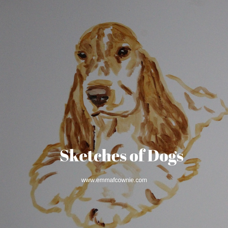 Sketches of dogs