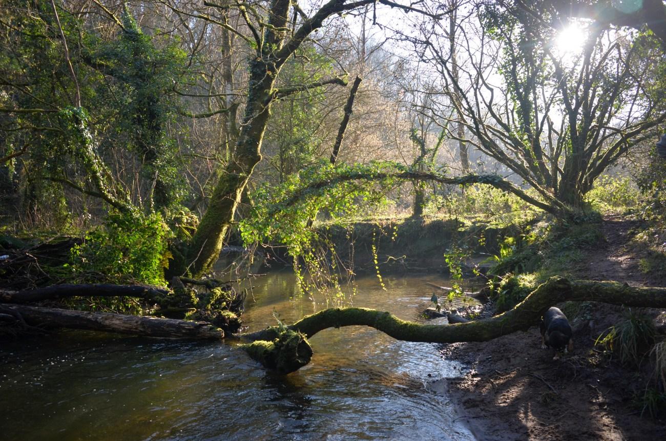 Gower Woodland