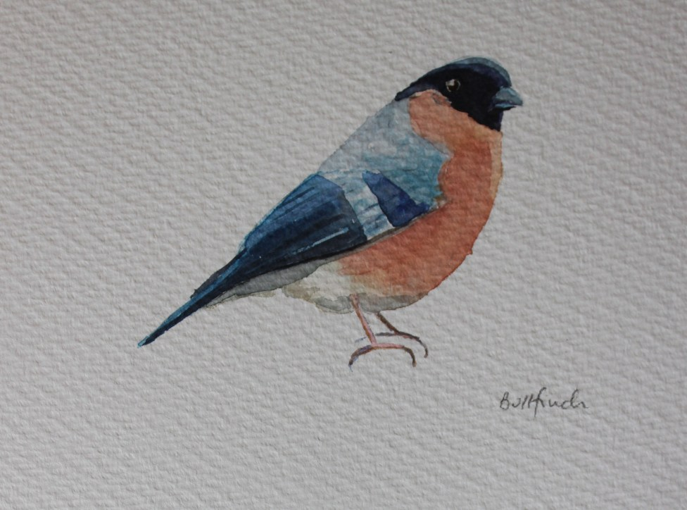 Watercolour bullfinch (male)