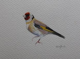 Goldfinch#1