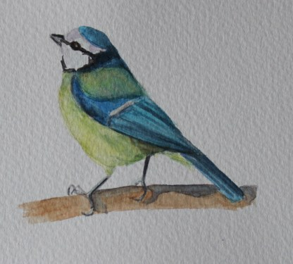 bluetit watercolour
