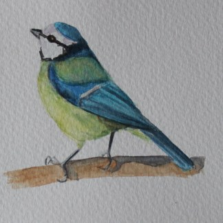 bluetit watercolour
