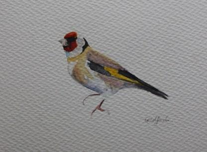 Goldfinch watercolour