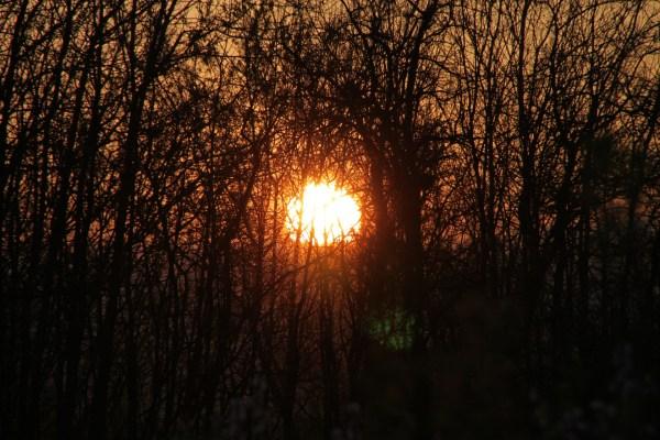sunset, forest, Beast of Weissburg
