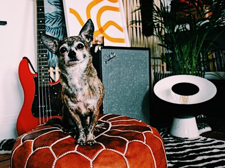 EJP-Seventies-Trend-Interiors-George-Chihuahua