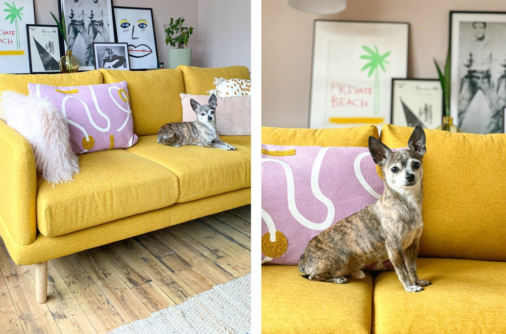 dog sitting on mustard John Lewis sofa with mauve and pink cushions