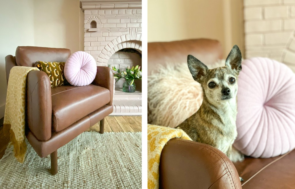 dog sitting on brown leather armchair