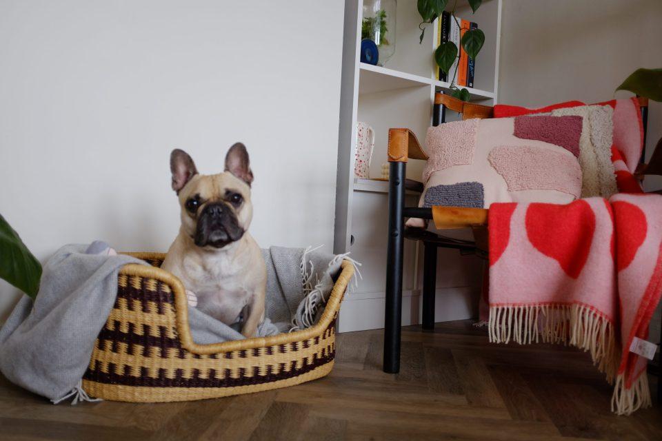 dog sitting in rattan basket