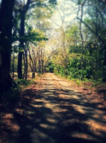Country Walk