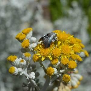 Bees-1---Emma-Keating-Jewellery