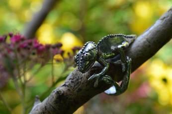 Chameleon-Ring-3---Emma-Keating-Jewellery