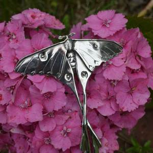 Moon Moth 11 - Emma Keating Jewellery